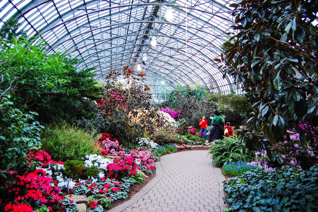 a path winds through lush greenery and flowers inside a greenhouse